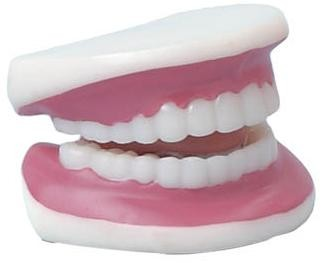 Picture of TEETH ANATOMICAL MODEL
