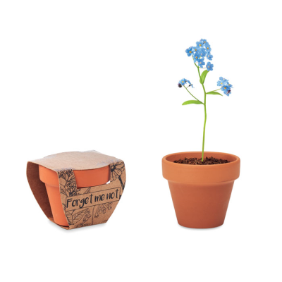 Picture of TERRACOTTA POT FORGET ME NOT