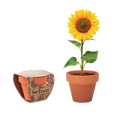 Picture of TERRACOTTA POT SUNFLOWER