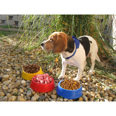Picture of PUPPY DOG BOWL