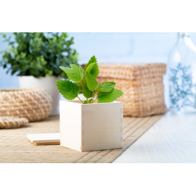 Picture of MINTS HERB POT MERIN