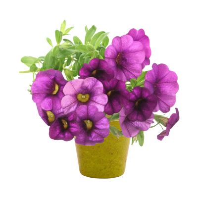 Picture of PETUNIA FLOWER POT in Beige