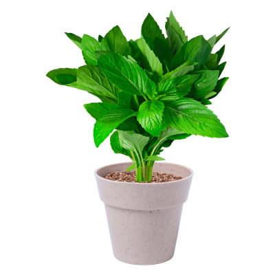 Picture of NERTEL HERB POT SET with 2 Biodegradable Flower Pots