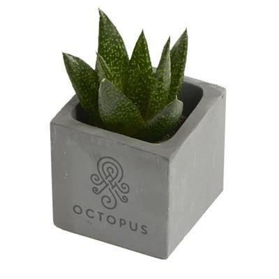 Picture of SMALL CONCRETE PLANTED POT (ENGRAVING TO ONE SIDE)