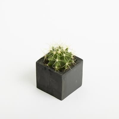 Picture of SMALL CONCRETE PLANTED POTS (ENGRAVING TO BOTH SIDE)