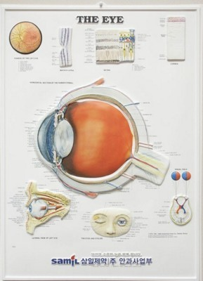 Picture of 3D ANATOMICAL CHART THE EYE