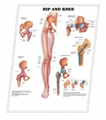 Picture of 3D ANATOMICAL CHART HIP AND KNEE
