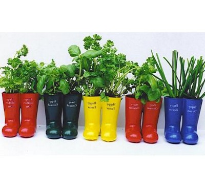 Picture of WELLY WELLINGTON BOOT HERB PLANT POT