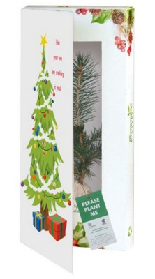 Picture of REAL LIVE NORWAY SPRUCE TREE in a Christmas Greeting Card