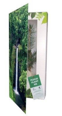 Picture of REAL LIVE NORWAY SPRUCE TREE in a Greeting Card