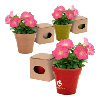 Picture of FLOWERPOT ADVERT