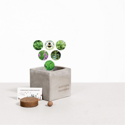 Picture of SMALL CONCRETE POT - GROW KIT - HERB MIX - ROCK