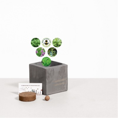 Picture of SMALL CONCRETE POT - GROW KIT - HERB MIX - BATTLESHIP