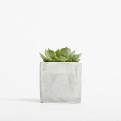 Picture of SMALL CONCRETE POT - SUCCULENT PLANT - MARBLE