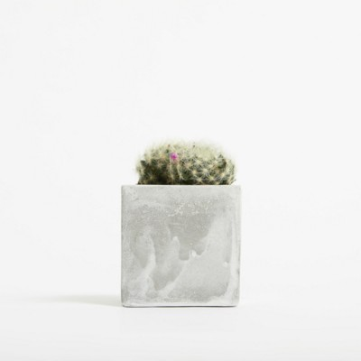 Picture of SMALL CONCRETE POT - CACTUS PLANT - MARBLE