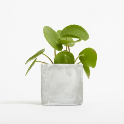 Picture of SMALL CONCRETE POT - MONEY PLANT - MARBLE