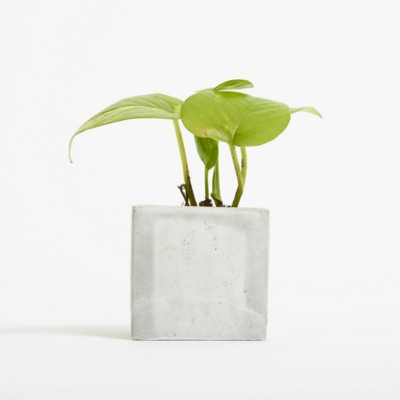 Picture of SMALL CONCRETE POT - DEVILS IVY - MARBLE
