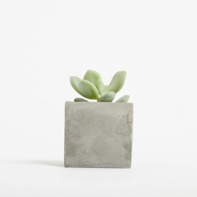 Picture of SMALL CONCRETE POT - SUCCULENT PLANT - ROCK