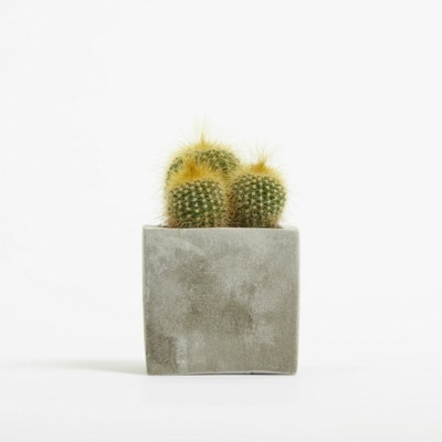 Picture of SMALL CONCRETE POT - CACTUS PLANT - ROCK
