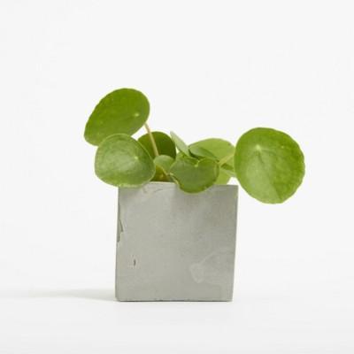 Picture of SMALL CONCRETE POT - MONEY PLANT - ROCK