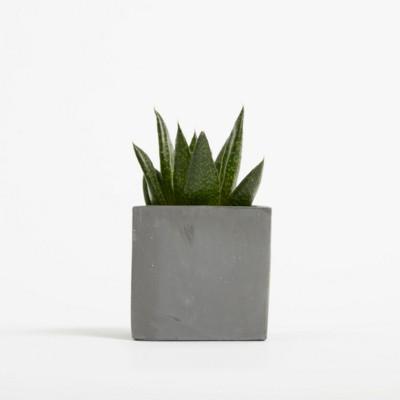 Picture of SMALL CONCRETE POT - SUCCULENT PLANT - BATTLESHIP