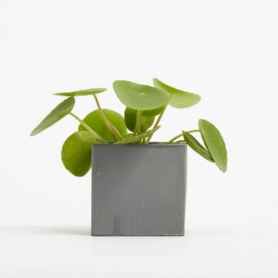 Picture of SMALL CONCRETE POT - MONEY PLANT - BATTLESHIP