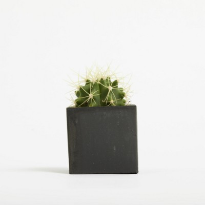 Picture of SMALL CONCRETE POT - CACTUS PLANT - SPACE